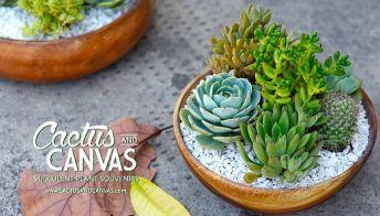 succulents-philippines-cactus-and-canvas