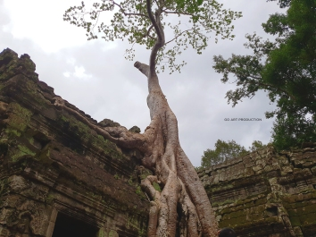 Bayan trees everywhere